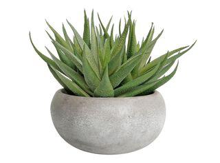 Planta Aloe Leave 19 x 15 cm Alaniz Home,,hi-res
