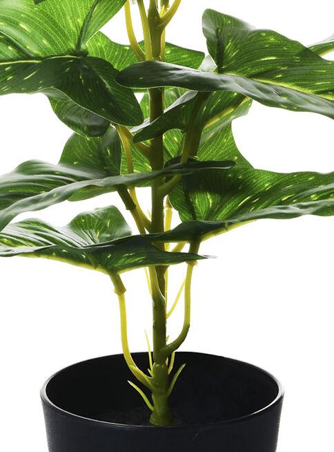 Planta%20Philodendron%2035%20cm%20Negro%20Mallorca%2C%2Chi-res