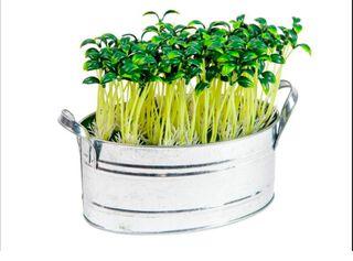 Planta Artificial Base Latón Sohogar,,hi-res