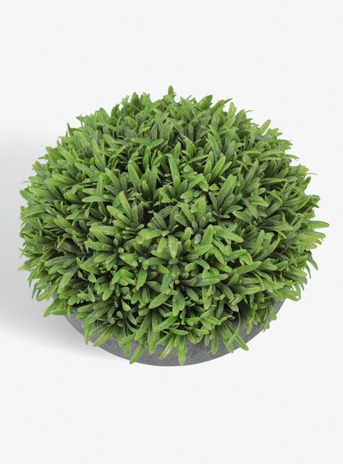 Arbusto%20Rosemary%20Bajo%2019x19x16cm%20Alaniz%20Home%2C%2Chi-res