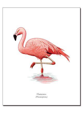 Lámina Ilustrativa Flamenco 20 x 25 cm Andes1,,hi-res
