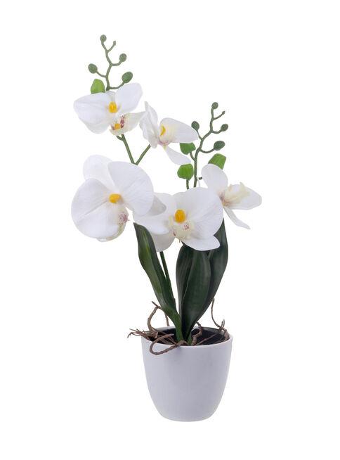 Orquidea%20Real%2043%20cm%20Blanco%20Mallorca%2C%2Chi-res