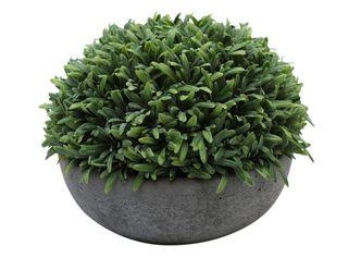 Arbusto Rosemary Bajo 19x19x16cm Alaniz Home,,hi-res