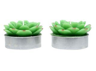 Set 2 Velas Cactus 2 Alaniz Home 16 x 8 x 4.5 cm,,hi-res