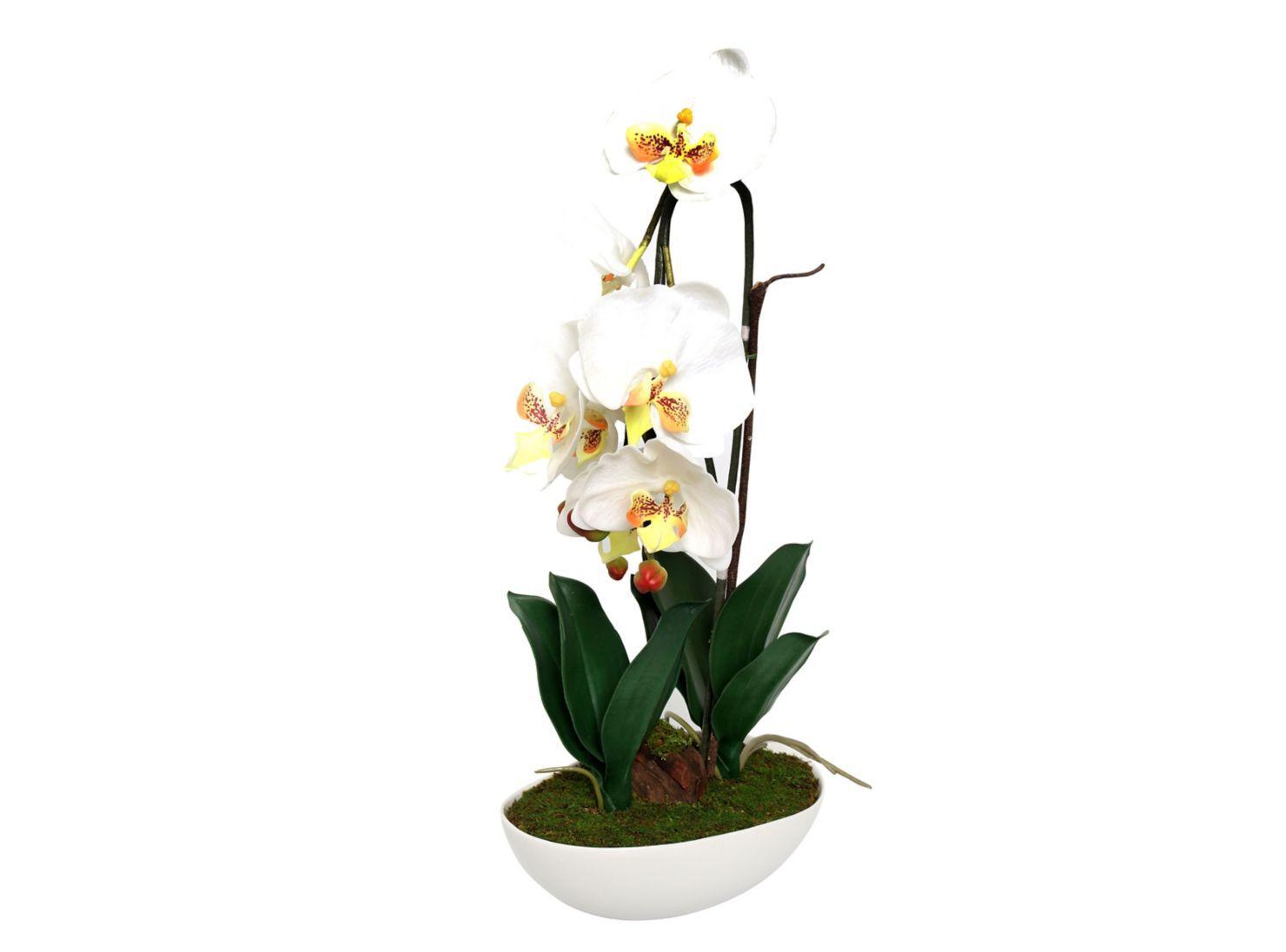 4537122cc Orquidea Blanca Grande Sarah Miller en Flores y Plantas | Paris