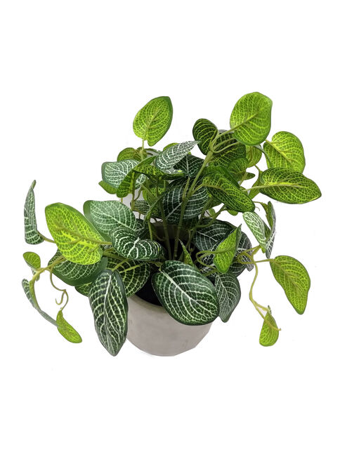 Planta%20Leaf%20Base%20Cemento%20Alaniz%20Home%2C%2Chi-res