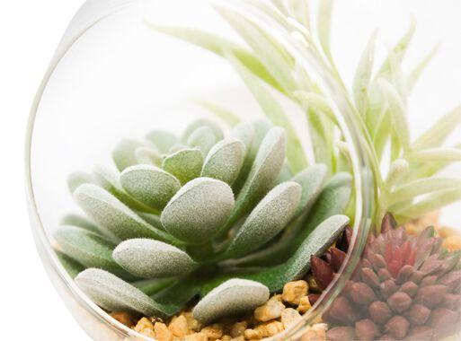 Terrario%20Suculenta%20Colgante%2012x10x13cm%20Alaniz%20Home%2C%2Chi-res