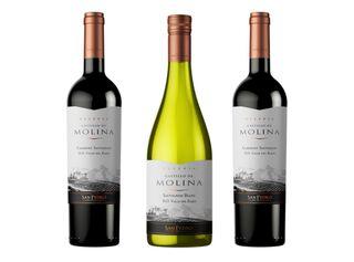 Vino Castillo de Molina Reserva Mix 3 Unidades,,hi-res