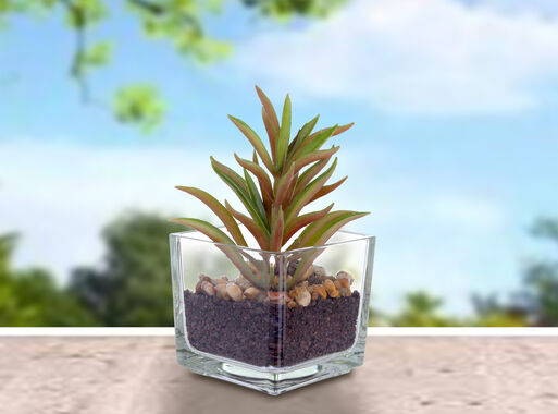 Planta%20Suculenta%20Alta%20Mallorca%2C%2Chi-res