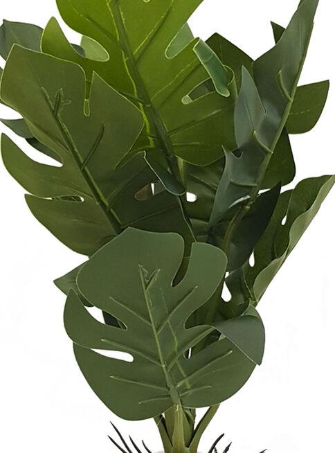 Planta%20Pata%20de%20Tigre%2033%20cm%20Blanco%20Mallorca%2C%2Chi-res