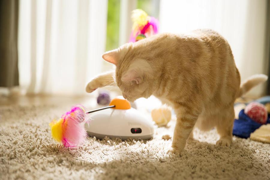 Juguete interactivo para gatos Pawbo Catch
