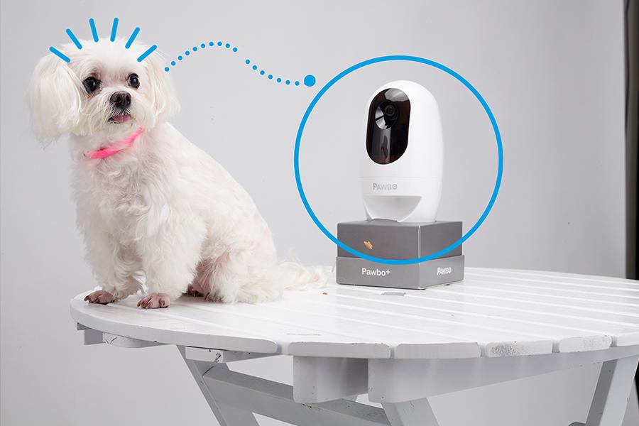 Conoce la cámara interactiva para mascotas Pawbo