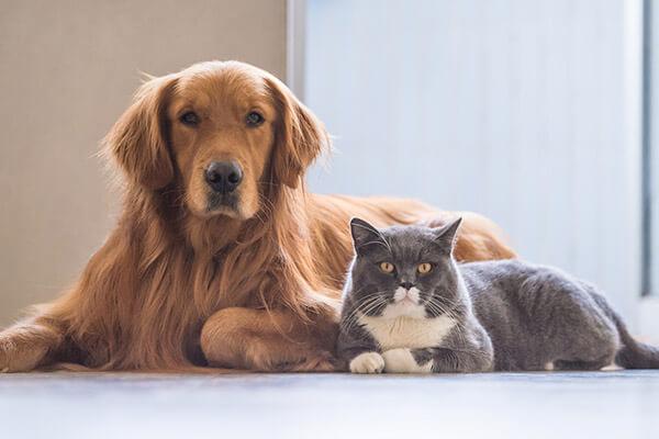 Alimentos y accesorios para perros, gatos y otros animales pequeños